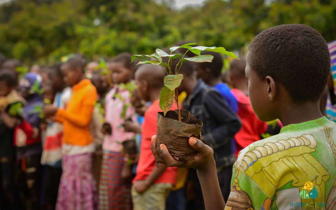 Growing a healthy planet: Ten tips for planting the right trees in the right places